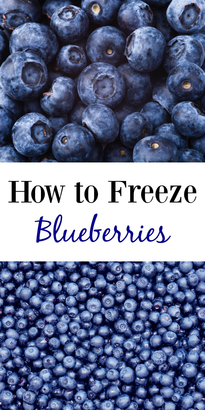 How to Freeze Blueberries--this frugal trick will show you just how easy it is to freeze farm fresh blueberries to use in baked goods, smoothies and more all year long!