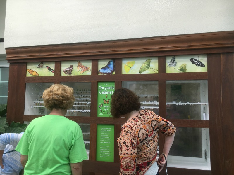 Chrysalis Cabinet at the Butterfly Atrium in the Hershey Gardens #SweetestMoms #partner